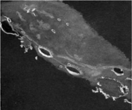 Craters Cardanus, Krafft and Eddington