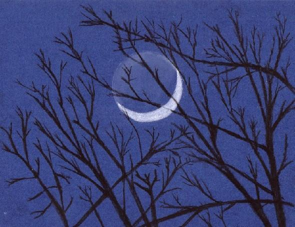 Crescent Moon in Trees
