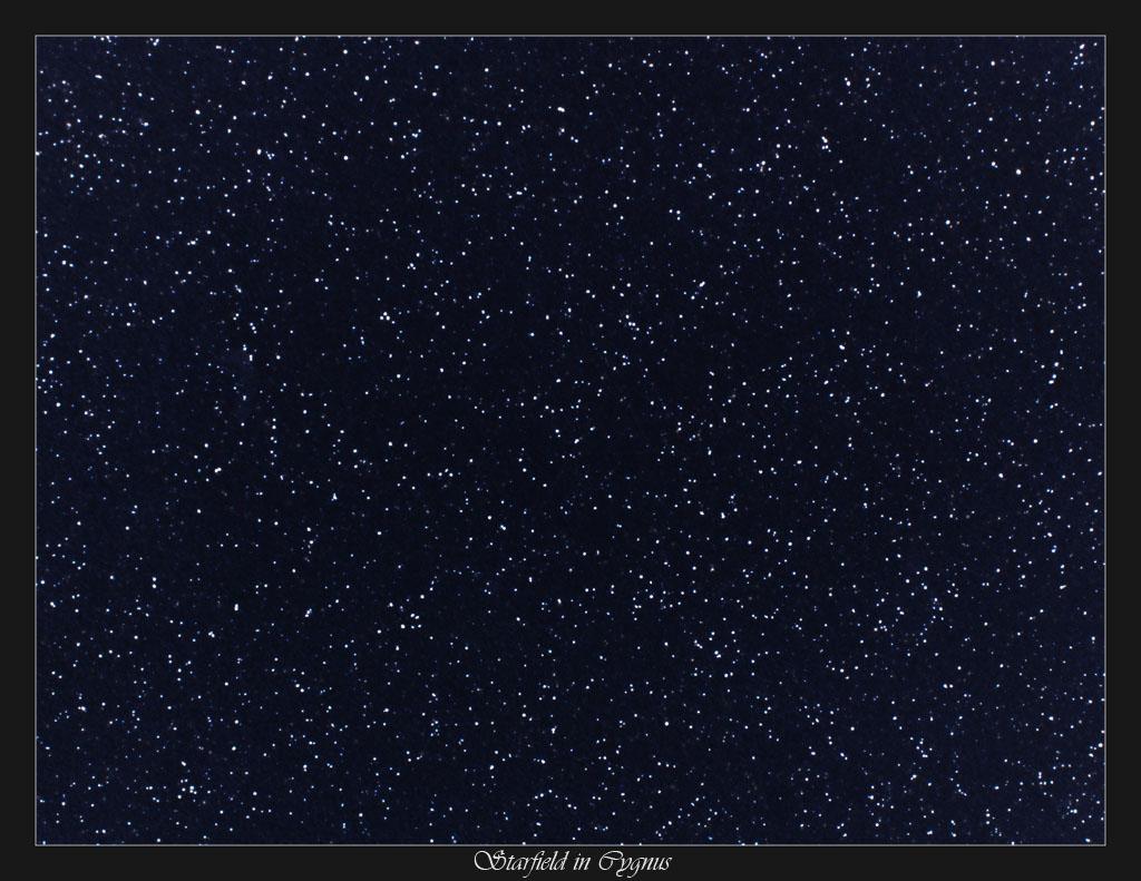 Cygnus Starfield