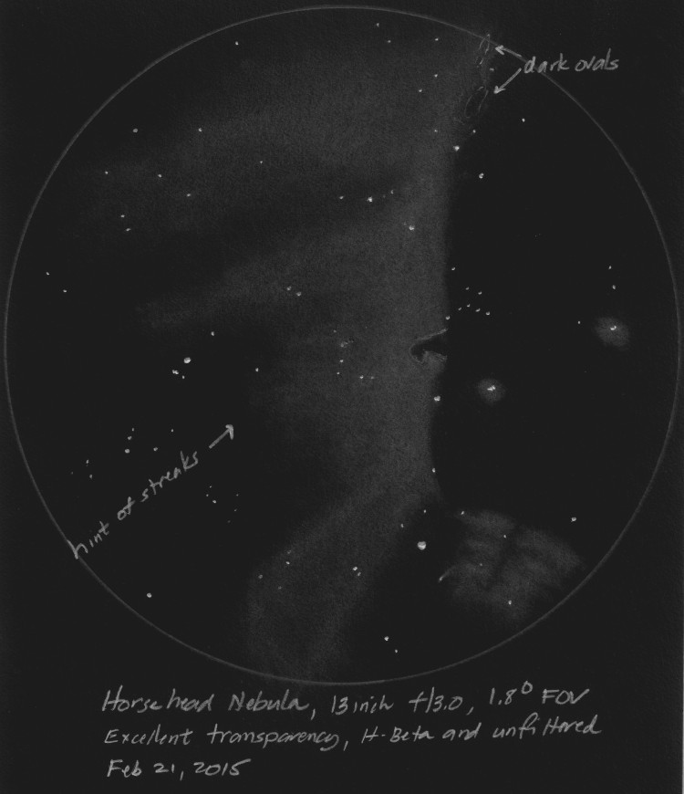 Horsehead Nebula Environs